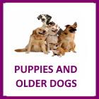 Puppy/Older Dog